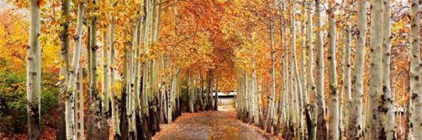 پاییز در پارک ناژوان اصفهان